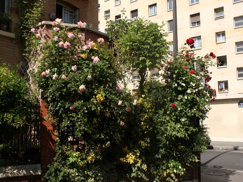 Montsouris cite floreale rue glycines 2.jpg